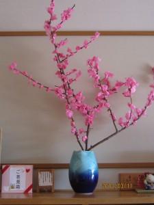 桜!!!!