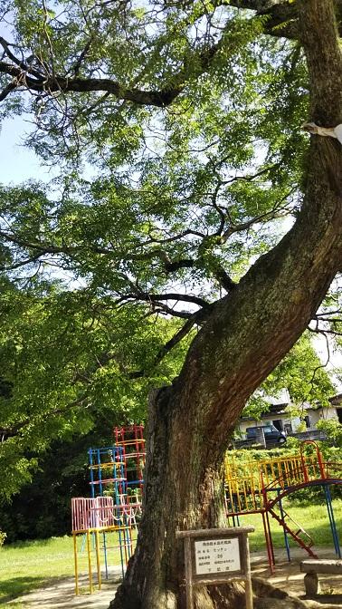 センダンの樹
